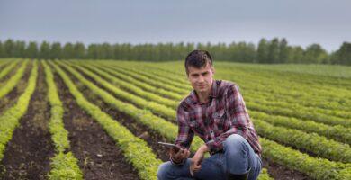 Técnico en Proyectos Agropecuarios